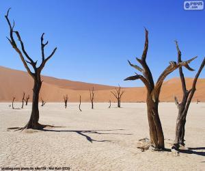 Puzzle Deadvlei, Namibie