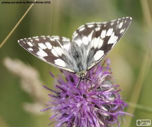 Puzzle Demi-deuil papillon