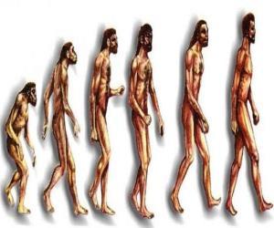 Puzzle Des séquences de l'évolution humaine à partir de australopithèque Lucy à l'homme moderne, en passant entre autres par des hommes de Heidelberg, Beijing, Neandertal et Cromagnon