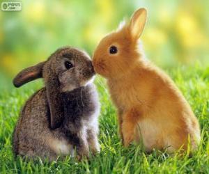 Puzzle Deux beaux lapins face à face
