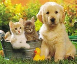 Puzzle deux chatons avec un chiot