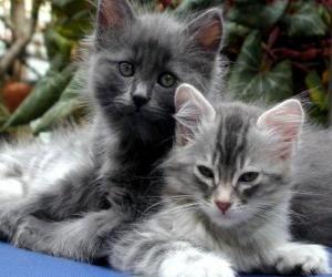Puzzle Deux chatons de repos