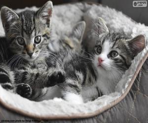 Puzzle Deux chatons mignons