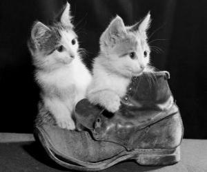 Puzzle Deux chatons sur le dessus d'une botte