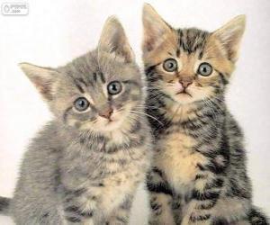 Puzzle Deux chatons