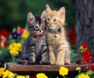 Puzzle deux chats avec collier