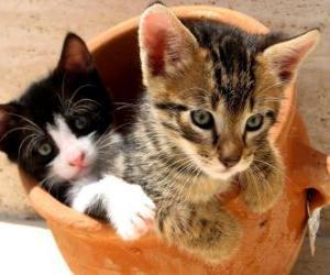 Puzzle Deux chats dans un vase