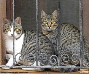 Puzzle Deux chats dans une fenêtre