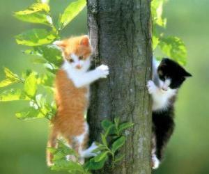Puzzle Deux chats l'escalade d'un arbre