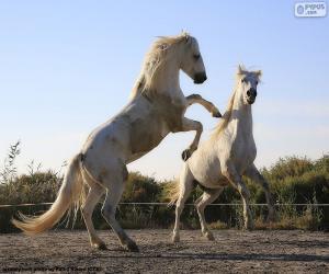 Puzzle Deux chevaux blancs