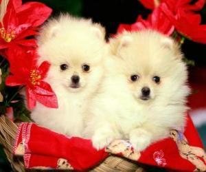 Puzzle deux chiens à côté d'une des plantes de Noël