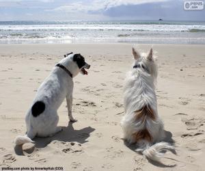 Puzzle Deux chiens sur la plage