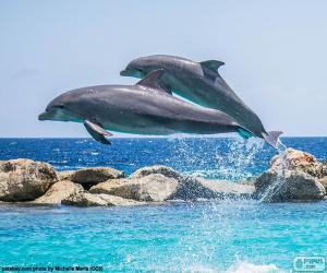 Puzzle Deux dauphins en sautant