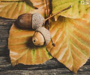 Puzzle Deux glands et feuilles d'automne