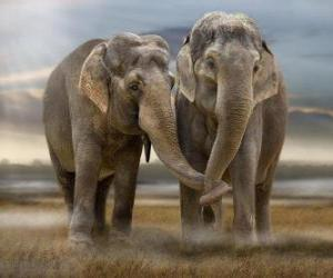 Puzzle Deux grands éléphants avec des troncs entrelacés