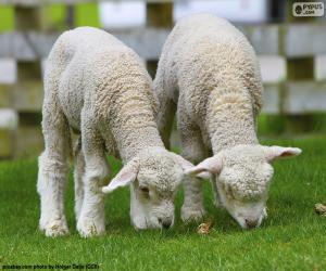 Puzzle Deux moutons tendres