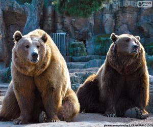 Puzzle Deux ours bruns