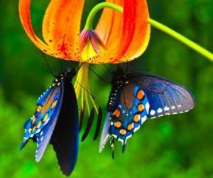 Puzzle Deux papillons sur une fleur