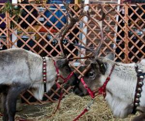 Puzzle Deux rennes de Noël