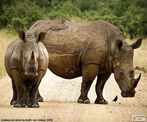 Puzzle Deux rhinocéros