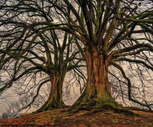 Puzzle Deux vieux arbres