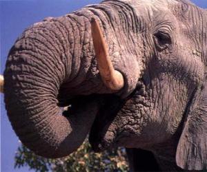 Puzzle Elephant manger