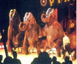 Puzzle Elephants formés