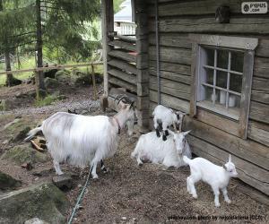 Puzzle Famille de chèvres