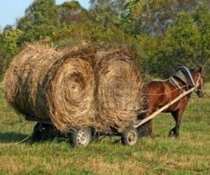 Puzzle Fermier avec un chariot hippomobile