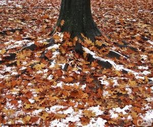 Puzzle Feuilles et neige