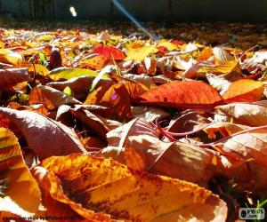 Puzzle Feuilles mortes en automne