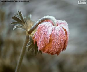 Puzzle Fleur congelé