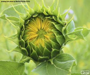 Puzzle Fleur d'ouverture au soleil
