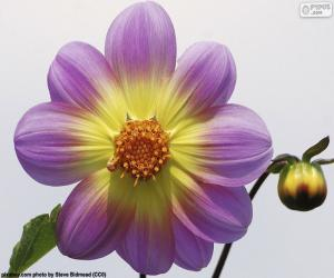 Puzzle Fleur de Dalia