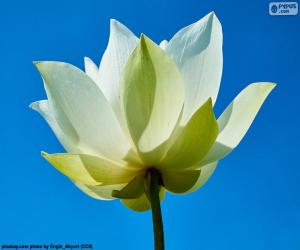 Puzzle Fleur de Lotus blanc