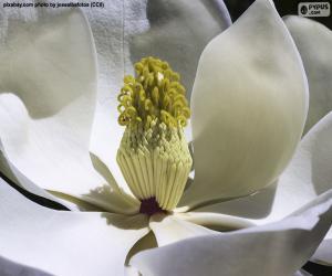 Puzzle Fleur de Magnolia