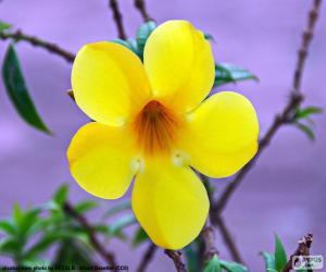 Puzzle Fleur jaune de cinq pétales