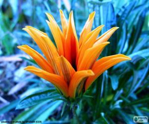 puzzle de fleur orange exotique casse t te imprimer. Black Bedroom Furniture Sets. Home Design Ideas