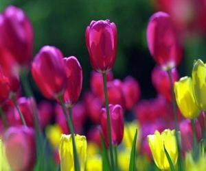 Puzzle Fleurs printanières