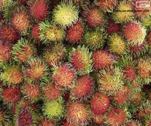 Puzzle Fruits de ramboutan