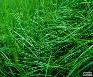 Puzzle Gazon ou pelouse