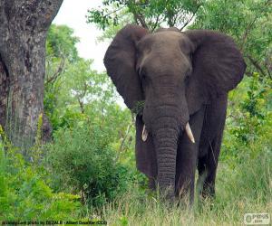 Puzzle Grand éléphant dans les bois
