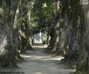 Puzzle Grands arbres, Brésil