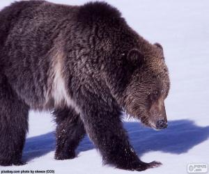Puzzle Grizzly bear