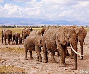 Puzzle Groupe d'éléphants