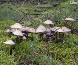 Puzzle Groupe de champignons