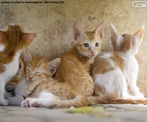 Puzzle Groupe de chatons