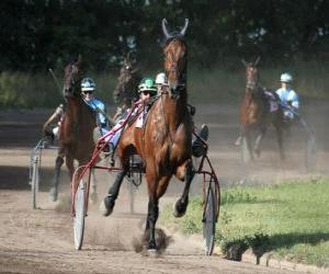 Puzzle Harness Racing