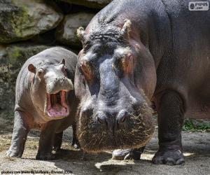 Puzzle Hippopotame à côté de leur élevage