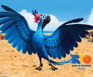 Puzzle Jewel est un ara belle femme dans le film de Rio